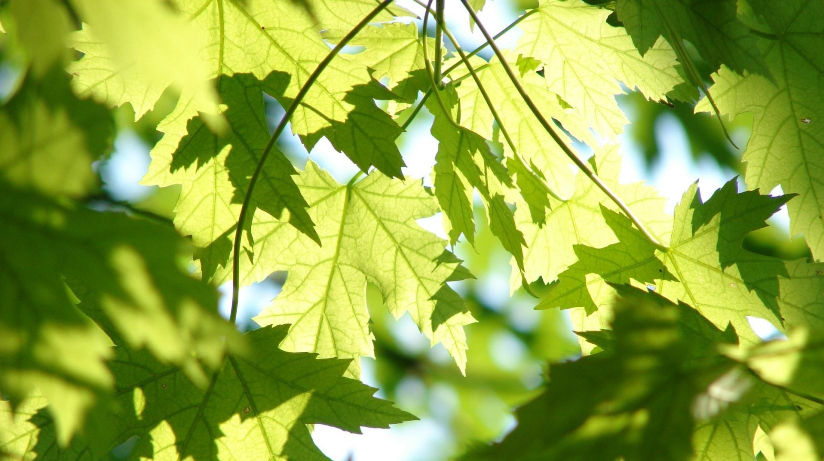 Green leaves on tree