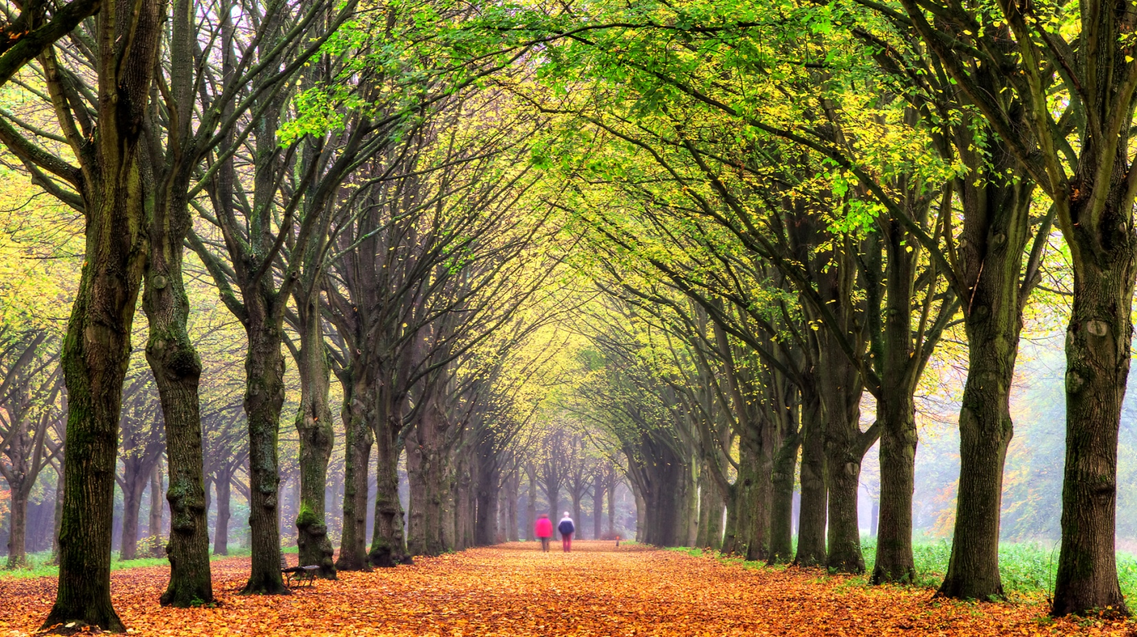 People walking along tree lined path
